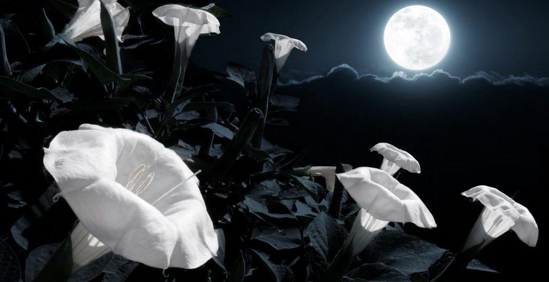 Rona Berg, Enchanted Living,